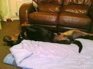 Barney restin!